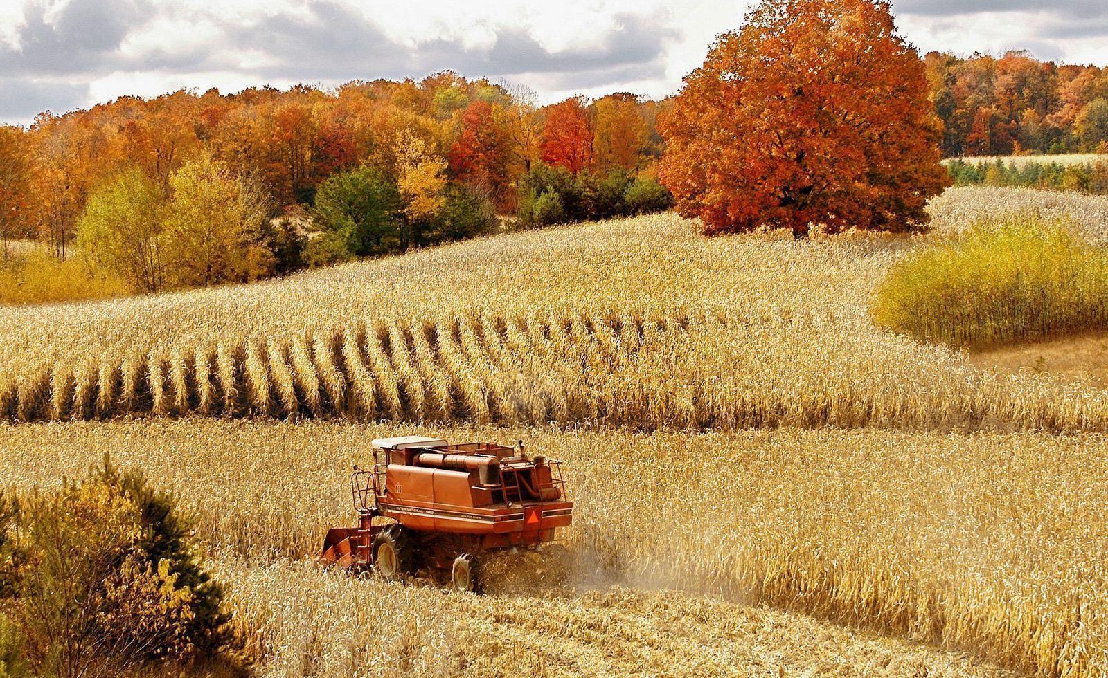 Fall Harvest Devotional